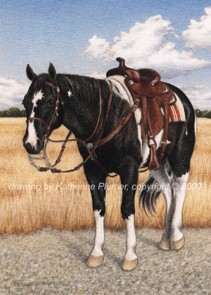 horse drawing by Katherine Plumer