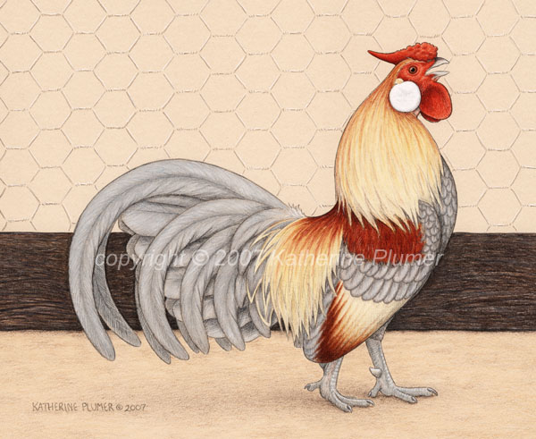 Rosecomb Chicken art drawing